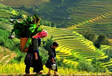 HANOI - HALONG - SAPA - NINHBINH 7 DAYS 6 NIGHTS from 362 USD/Person only