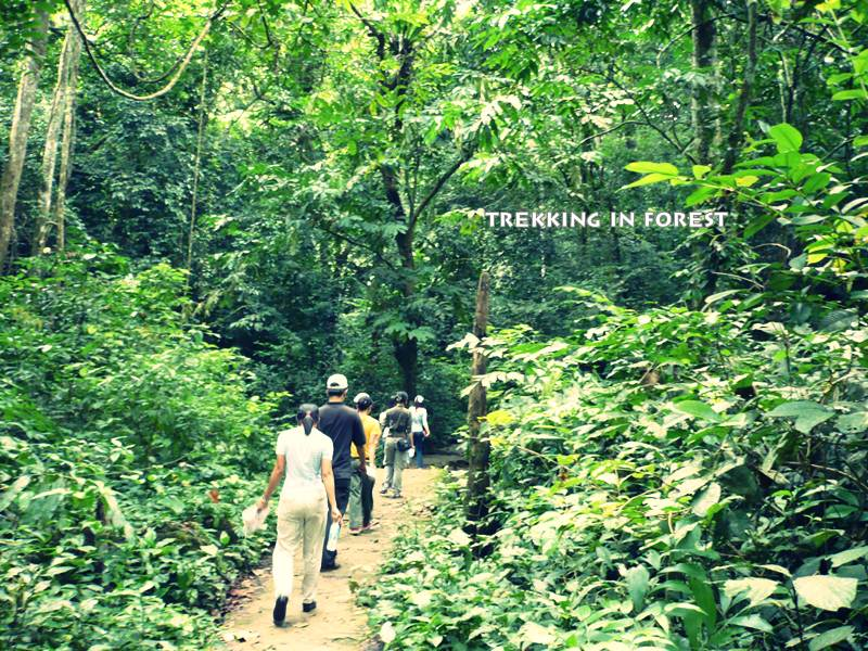 TREKKING IN CUCPHUONG NATIONAL PARK AND CYCLING IN TAMCOC 2 DAYS from 72 USD/person only