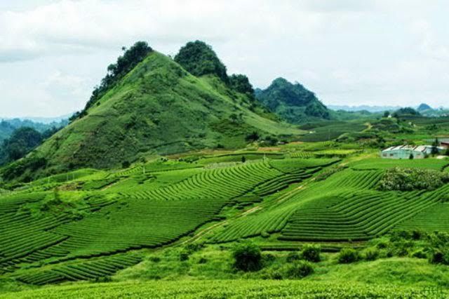 Image result for LA BANG TEA plantation